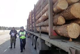 Установлена форма сопроводительный документ на транспортировку древесины