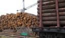 ФТС России информирует об изменении с 1 января 2022 года особенностей перемещения отдельных видов необработанной и грубо обработанной древесины