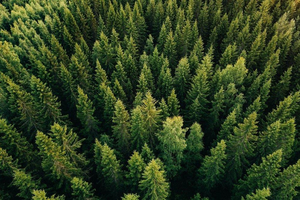 Запрет на экспорт круглой древесины коснется 4 тысяч организаций